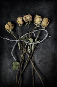Barbed Wire Framed Prints - Dead Roses Framed Print by Joana Kruse