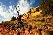 Dead Tree Against The Blue Sky Print by Jeff  Swan