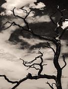 Arkady Kunysz - Dead tree