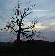 Carol Oberg Riley - Dead Tree at Sunset
