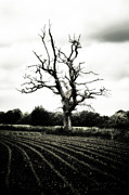 Dark Sky Photos - Dead Tree by Joana Kruse