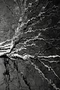 Carolyn Pettijohn - Dead Tree Reflecting - black and white