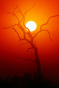 Dead Tree Silhouette And Glowing Sun Print by Johan Swanepoel