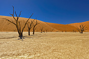Sossusvlei Area Posters - Dead Trees in Naukluft Park Namib Desert Poster by Paul W Sharpe Aka Wizard of Wonders