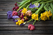 Dusky Prints - Dead Tulips Print by Svetlana Sewell