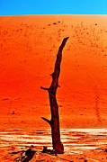 Dry Lake Photo Metal Prints - Dead Vlei - Sossusvlei Metal Print by Aidan Moran