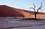 Stefan Carpenter Framed Prints - Dead Vlei Framed Print by Stefan Carpenter