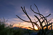 Arizona Sunset Photos - Dead Wood by Anthony Citro