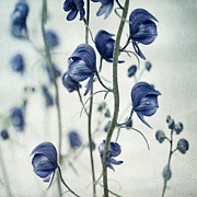"\""blue Flowers\\\"" Photos - Deadly Beauty by Priska Wettstein"