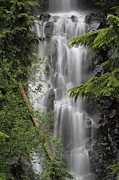 Mt Rainier National Park Prints - Deadwood Creek Waterfall Print by Angie Vogel