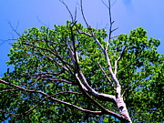 Tree And Wood Photography - DEATH and LIFE by Allen n Lehman