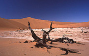 Desert Lake Mixed Media Posters - Death in the Namib Desert Poster by Anthony Dalton