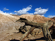 Jens Larsen - Death Valley Dead Wood