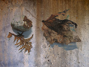Decay Digital Art Framed Prints - Decayed Leaf Still Life on Concrete 2 Framed Print by Anita Burgermeister