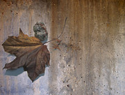 Decay Digital Art - Decayed Leaf Still Life on Concrete 3 by Anita Burgermeister