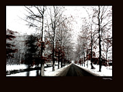 Snowed Trees Photos - December Road 2 by Xoanxo Cespon
