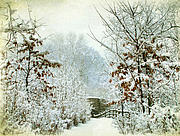 Winter Landscape Digital Art Framed Prints - Decembers Path Framed Print by Jessica Jenney