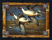 Wetland Framed Prints - Deco Pintail Ducks Framed Print by JQ Licensing