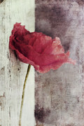 Close Up Floral Posters - Decor Poppy Poster by Priska Wettstein