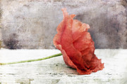 Close Up Floral Prints - Decor Poppy Red Print by Priska Wettstein