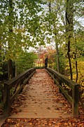 Photos With Red Photo Prints - Decorate With Leaves - Holmdel Park Print by Angie McKenzie