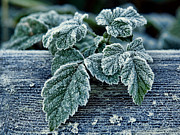 Seasonal Art - Decorated By Frost by Elaine Snyder