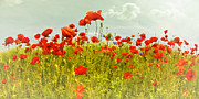 Rays Digital Art - Decorative-Art Field of Red Poppies by Melanie Viola