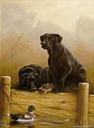 Black Lab Puppy Paintings - Decoy dawn by John Silver