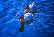 Brian Stevens - Deep Blue Ducks