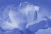 Textured Flowers Prints - Deep Blue Rose Print by Camille Lopez
