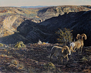 Canyon Paintings - Deep Creek Sunrise by Steve Spencer