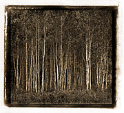 Russ Brown Framed Prints - Deep Forest Framed Print by Russ Brown