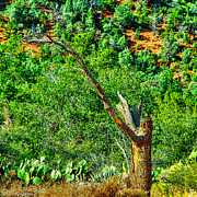 Beaver Digital Art - Deep in the Desert of Arizona Green Grows by Bob Johnston