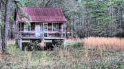 Tin Roof Prints - Deep in the Woods Print by JC Findley
