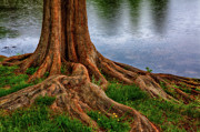 Rain Digital Art Metal Prints - Deep Roots - Tree on North Carolina Lake Metal Print by Dan Carmichael