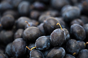 Ripe Photos - Deeply Damson by Anne Gilbert