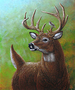 Antler Paintings - Deer and Sparrow by Cara Bevan