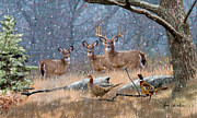Whitetail Deer Posters - Deer Art - First Snow Poster by Dale Kunkel