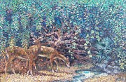 Sheila Tibbs - Deer at Juniper Springs