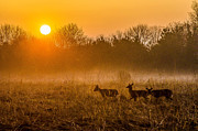 Todd Heckert - Deer at Sunrise