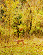 Breeding Posters - Deer Autumn Poster by Darren Fisher