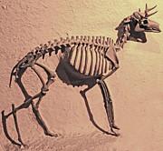 Gregory Dyer - Deer Bones