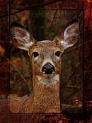 Pamela Phelps - Deer Connections