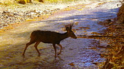 Creeks Prints - Deer Crossing Print by Jeff  Swan