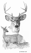 Doe Drawings Posters - Deer Family Poster by Paul Shafranski