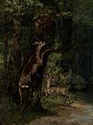 Climbing Painting Posters - Deer in the Forest Poster by Gustave Courbet