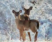 Deer In The Snow Print by Elizabeth Coats