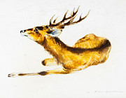 Horns Pastels - Deer by Kurt Tessmann