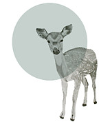 Mod Drawings - Deer by Morgan Kendall