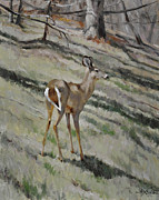 Scott Harding - Deer on Hillside